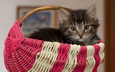 Как приучить кота к лотку?