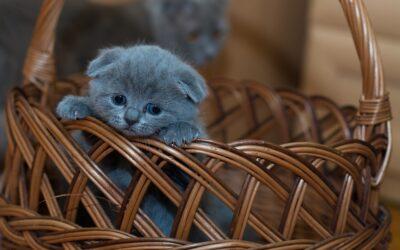 Что купить котенку в первую очередь?