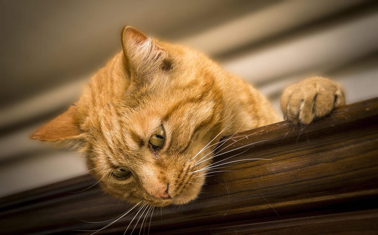 Как отучить кота царапать мебель?