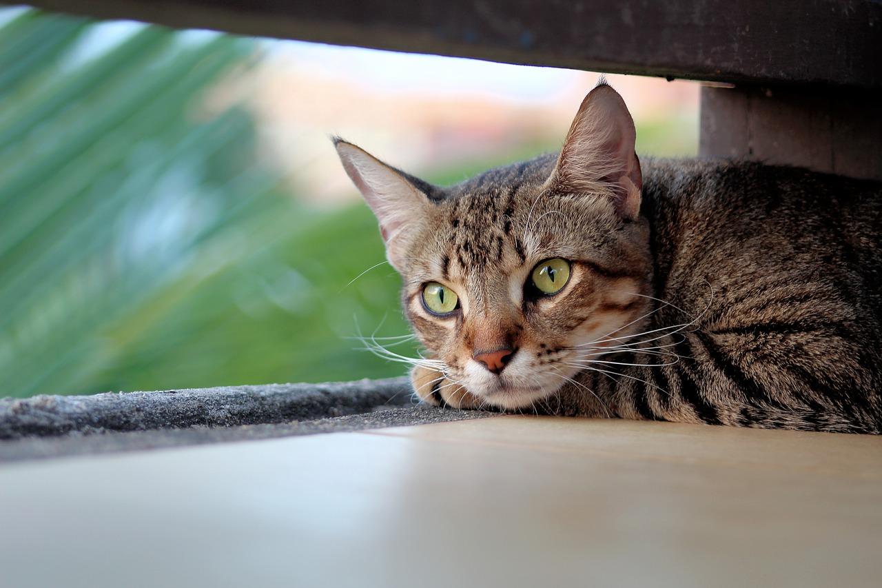 Как продлить жизнь кошке?