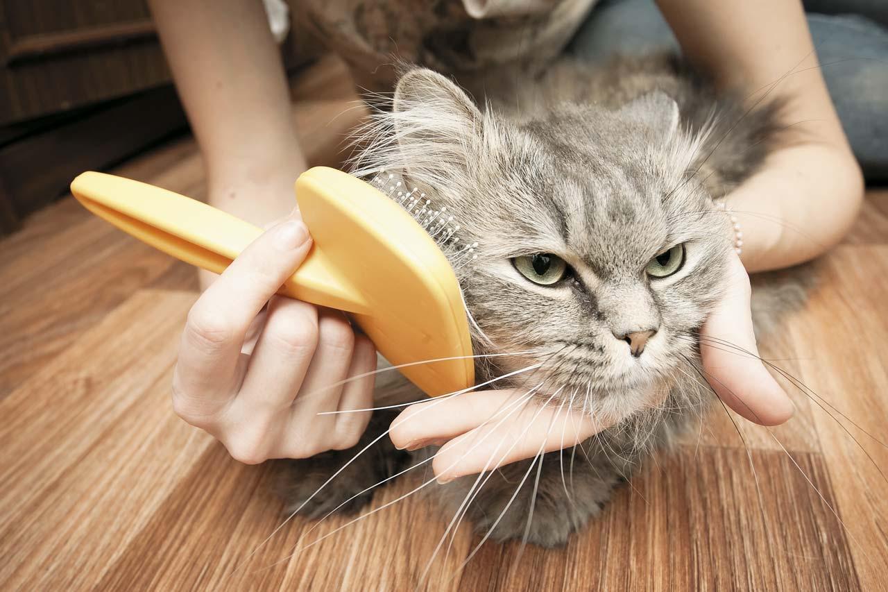 Причины выпадения шерсти у кошек