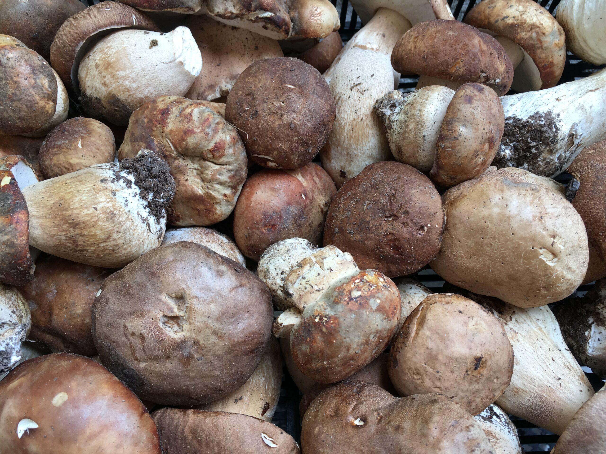 Равиоли с грибами и луком на основе готового пельменного теста
