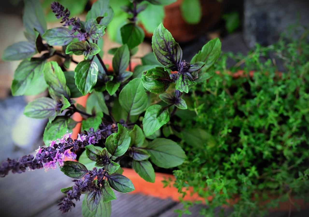 5 растений, которые можно посадить на балконе или на даче, чтобы отпугивать комаров