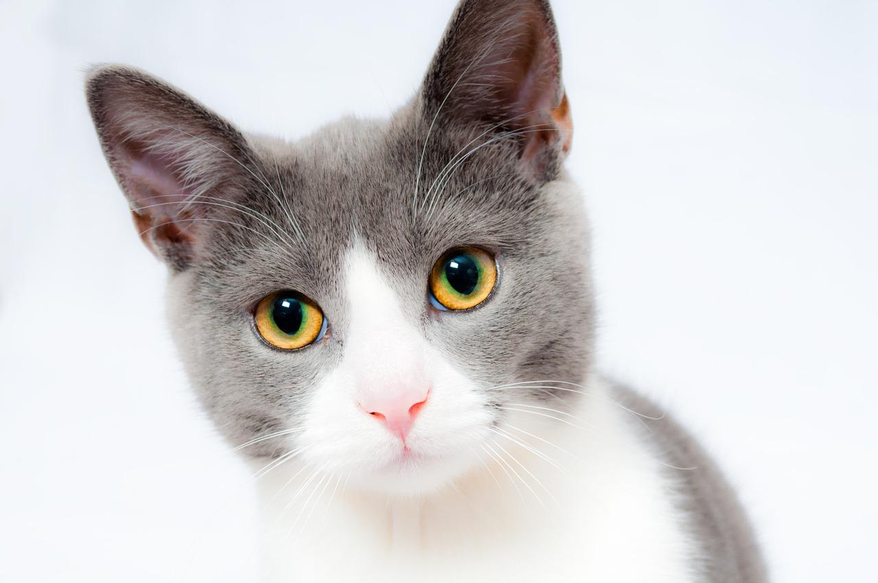 Чем можно и нужно кормить кошку?