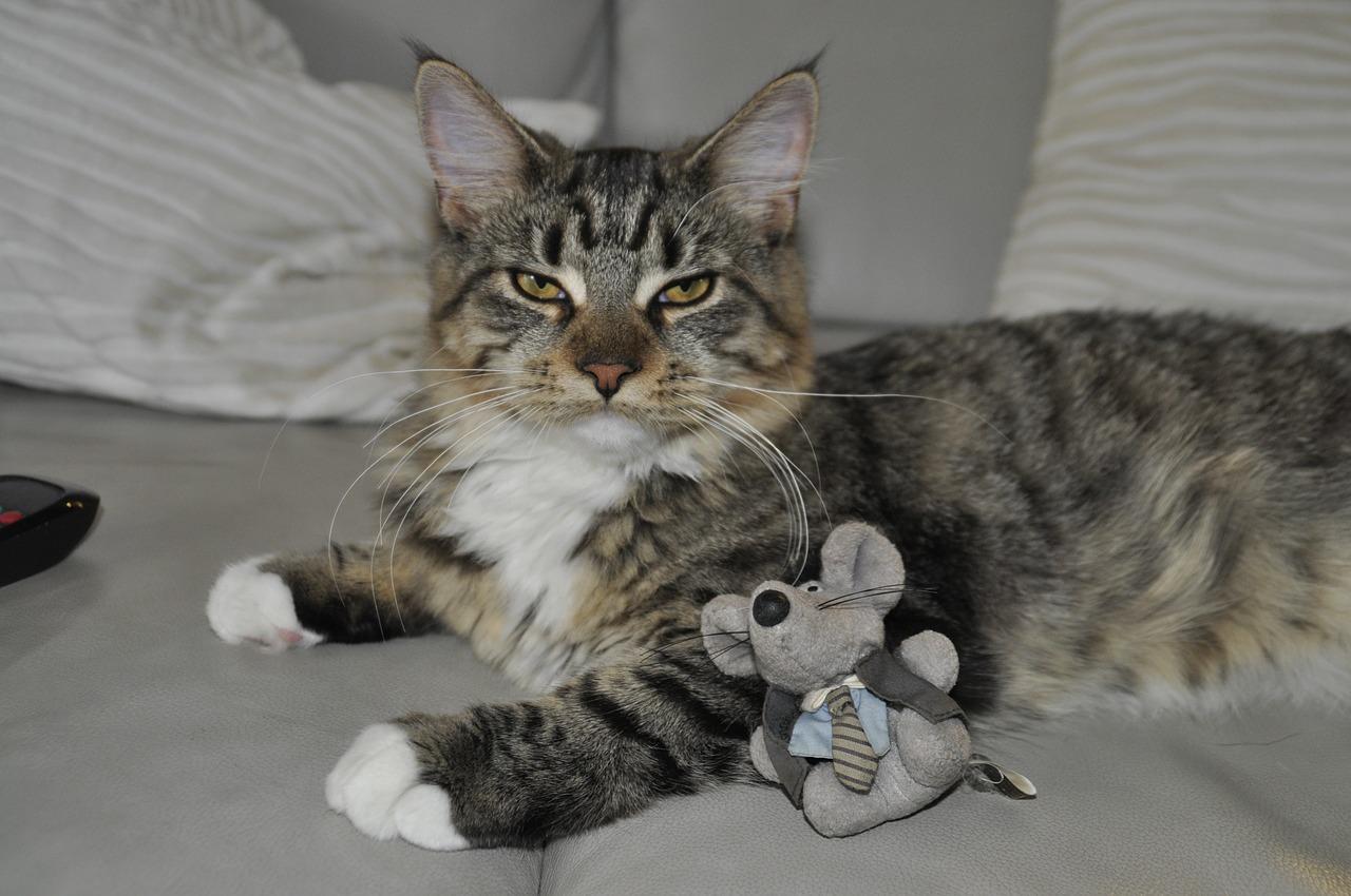 Кошка крысоловка на страже вашего хозяйства
