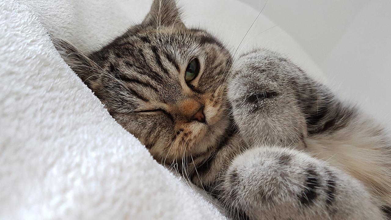 Преимущества содержания кошки