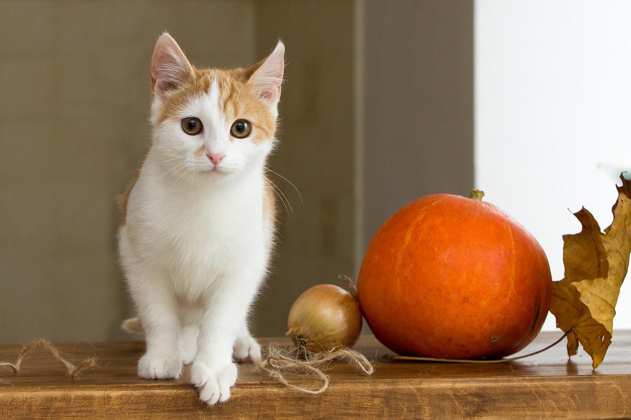 Лечение гайморита и аллергии у кошек