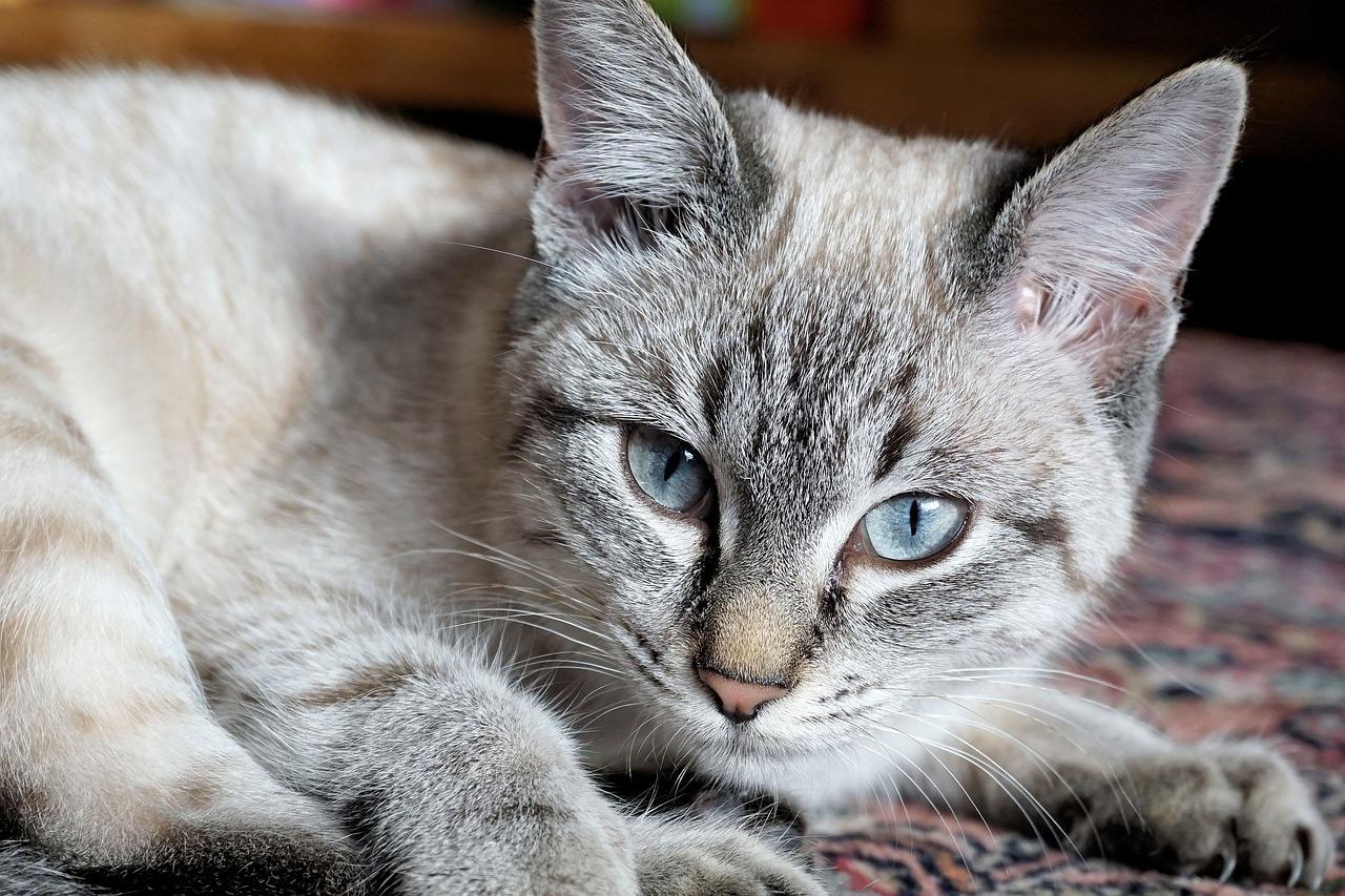 Как отучить кота гадить в неположенных местах