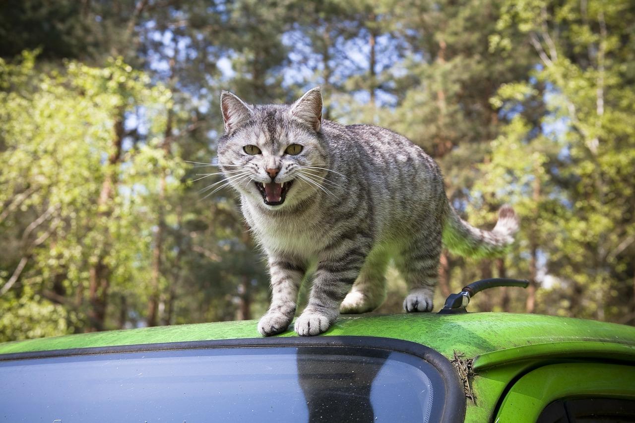 Едем на автомобиле с кошкой