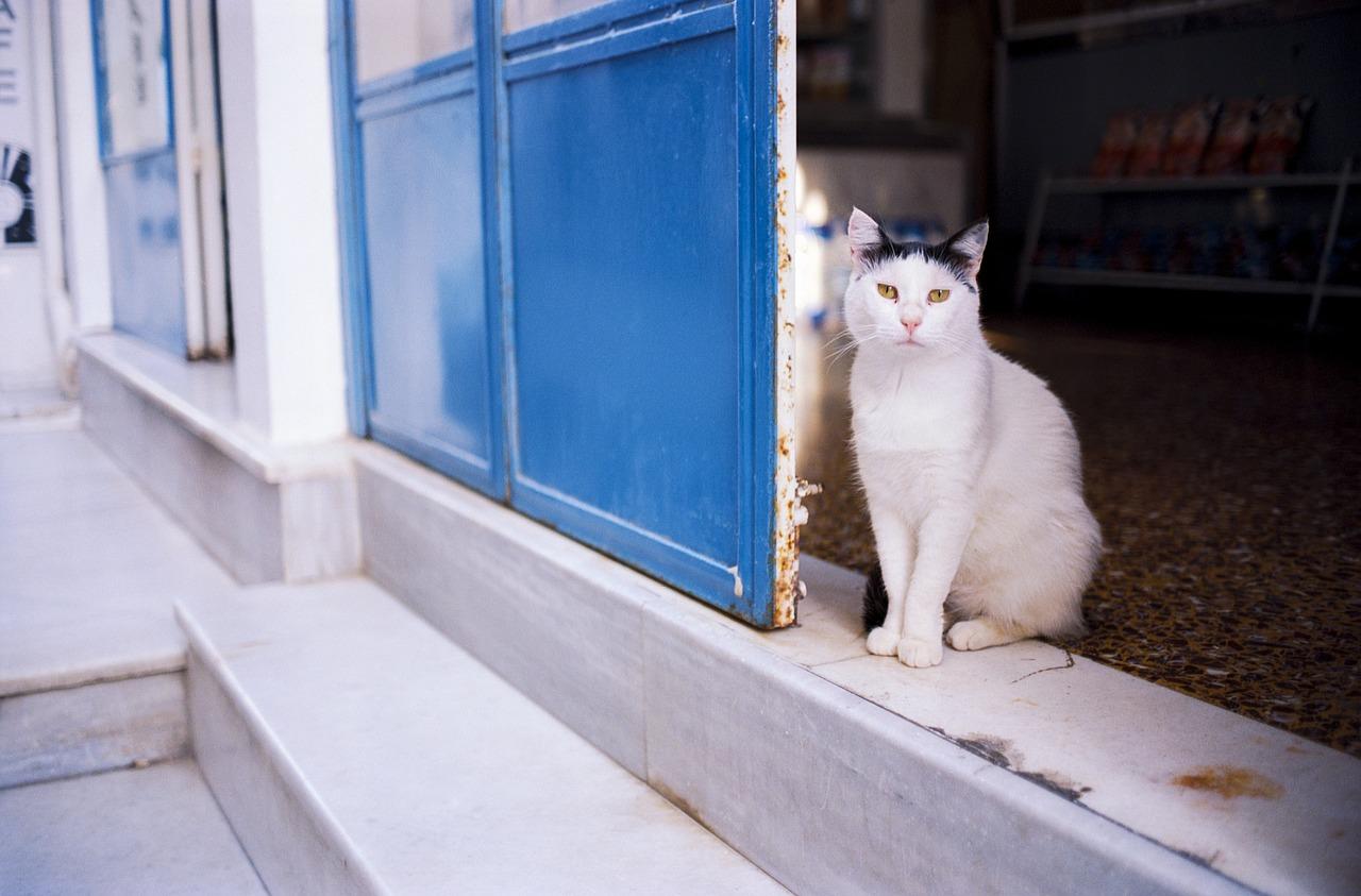 Где должна жить кошка: в помещении или на улице?