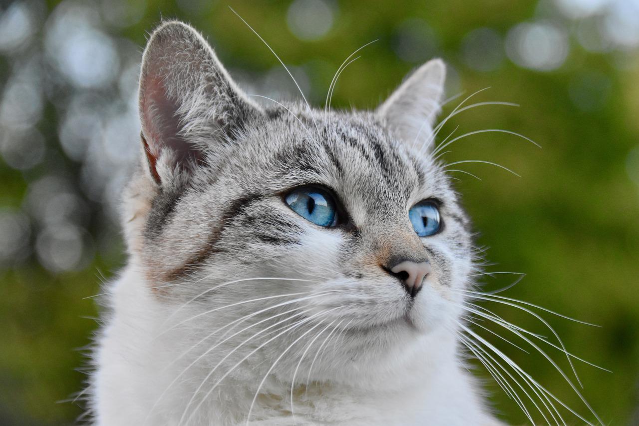 Какой наполнитель для кошачьего лотка выбрать?