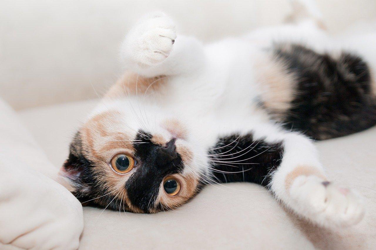 Как отучить кошку гадить мимо горшка?