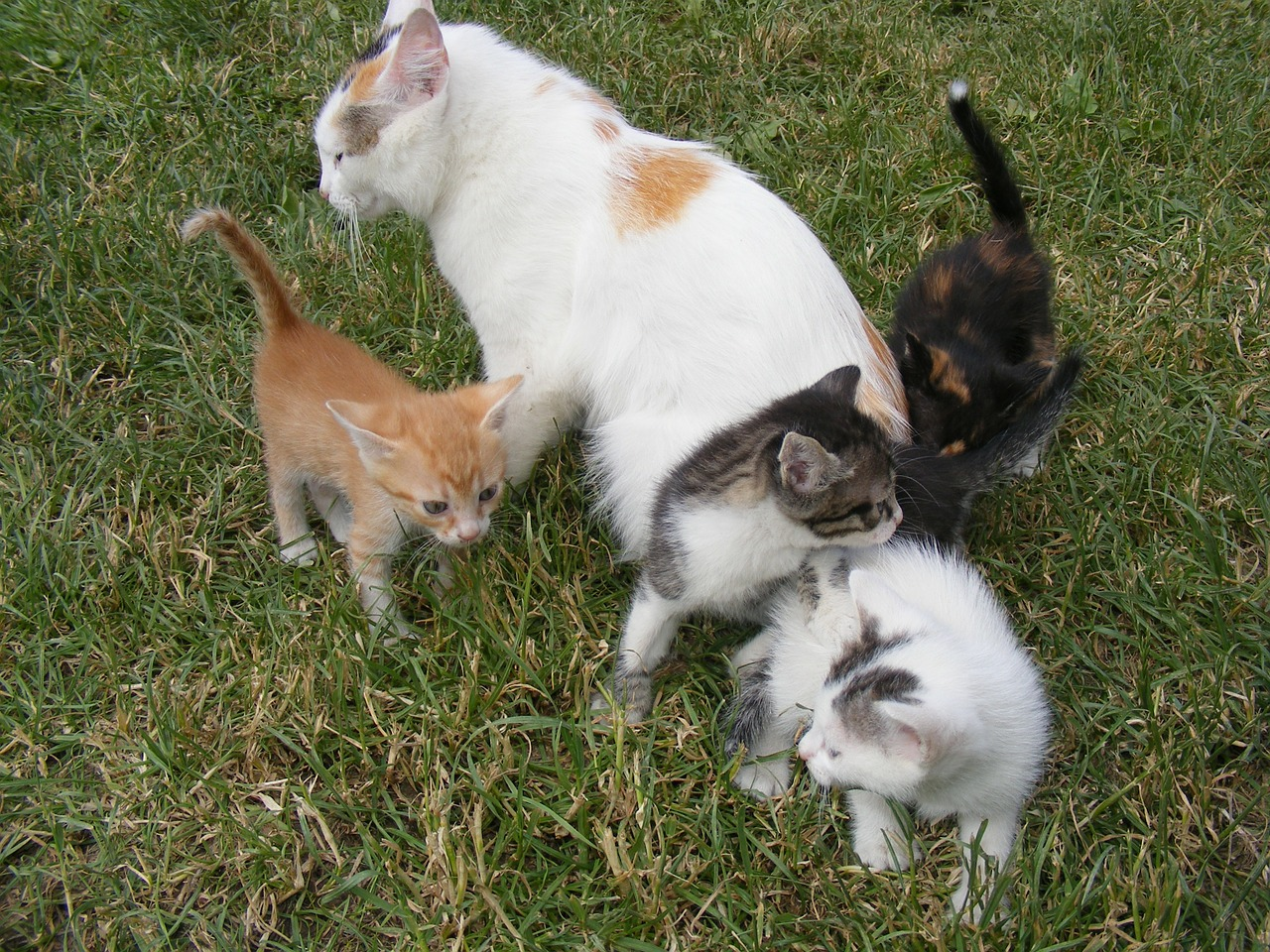 Роды кошки начинаются. Когда нужна помощь?