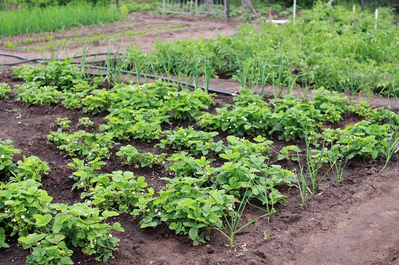 Зачем нужна весенняя пересадка растений?