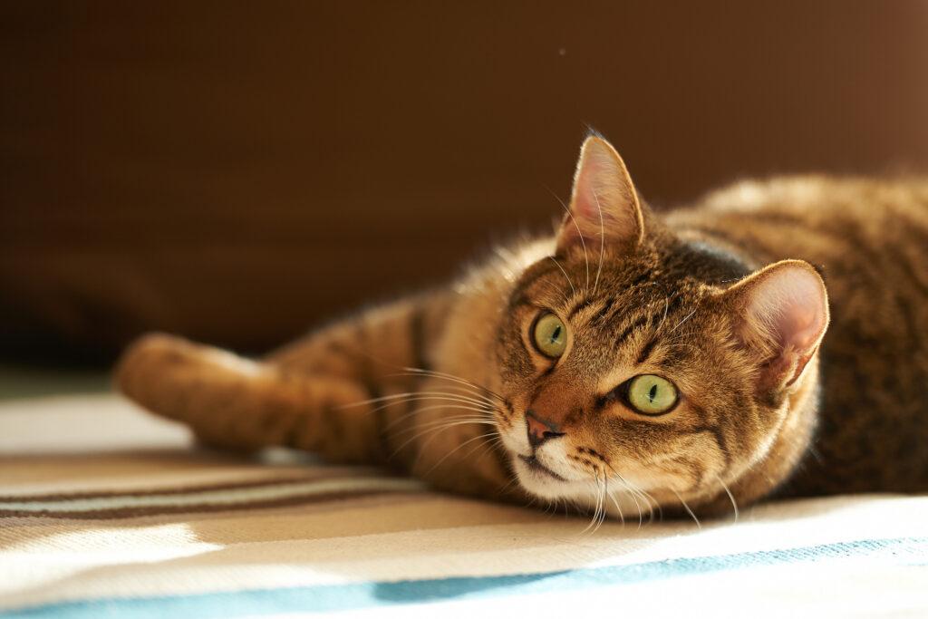Как ухаживать за пожилой кошкой?