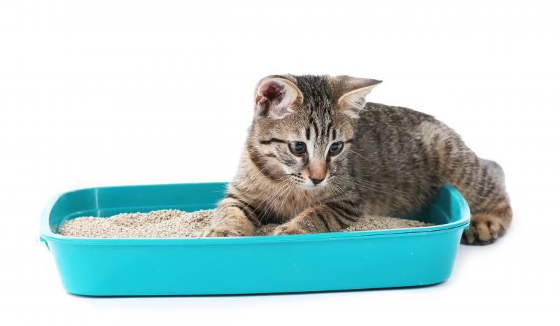 Уход за котенком лоток