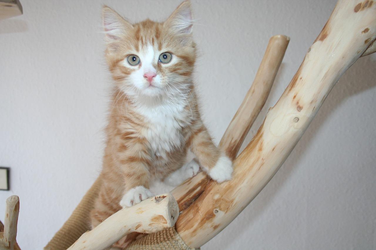 Нужно ли прививать котенка?