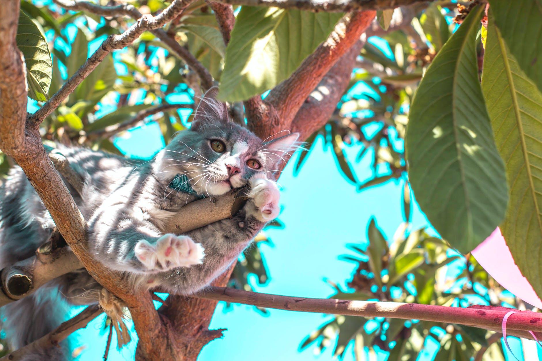 Почему кошка не может слезть с дерева и надо ли ей помогать?
