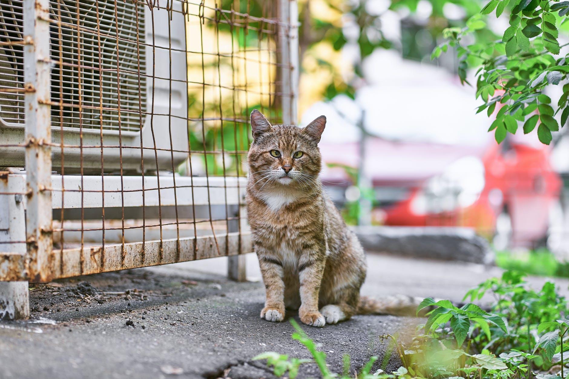 Проблемы с пищеварением у кошек