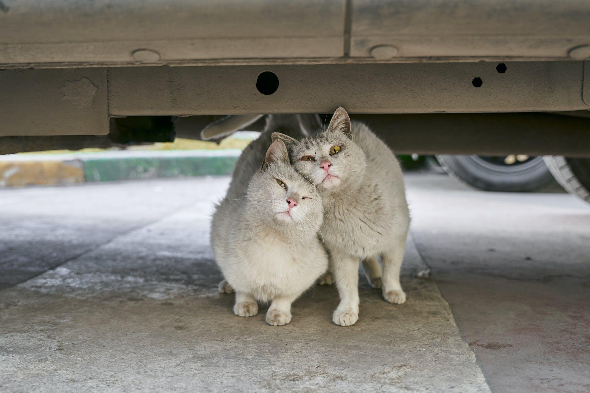 Выгодно ли разводить кошек?