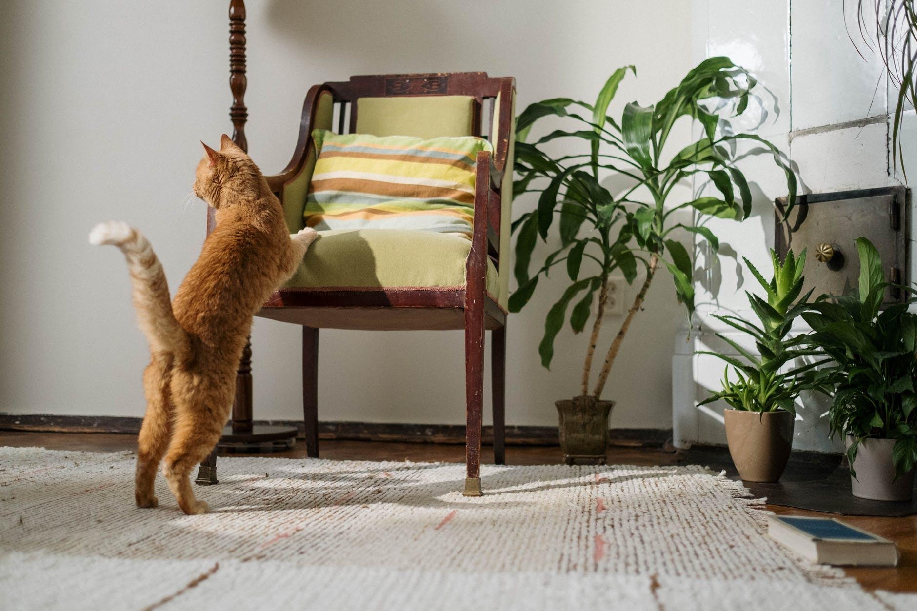 Наиболее частые причины сильной линьки у кошек
