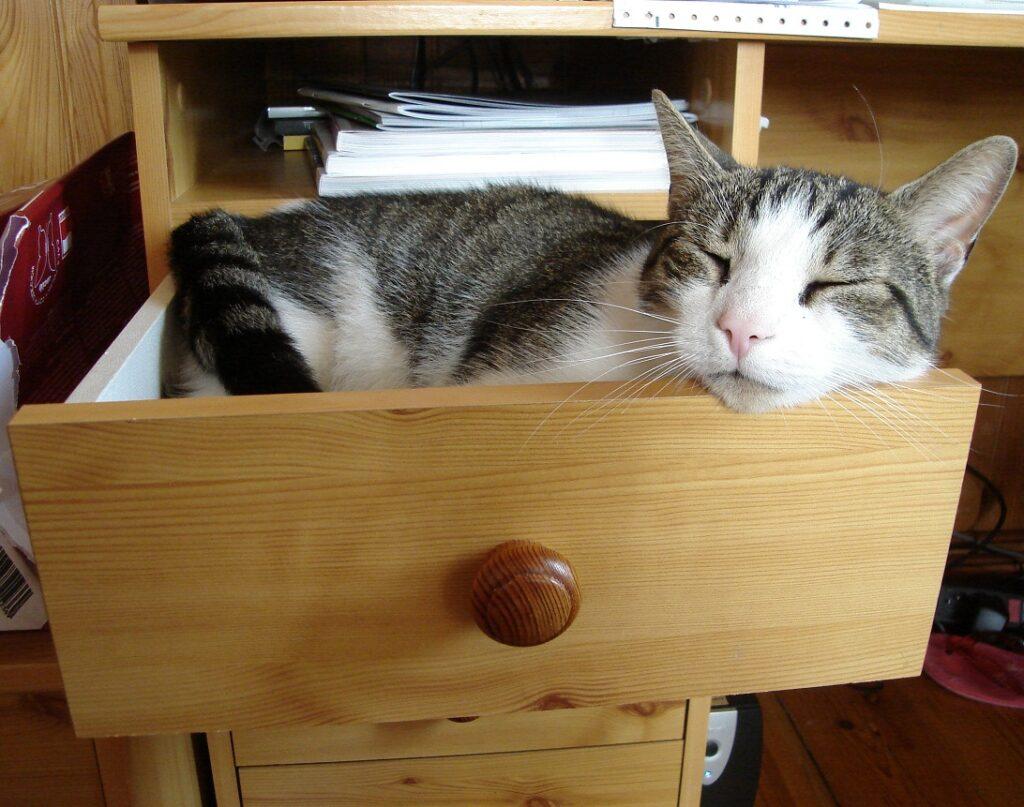 Куда пристроить кошку на период отпуска?