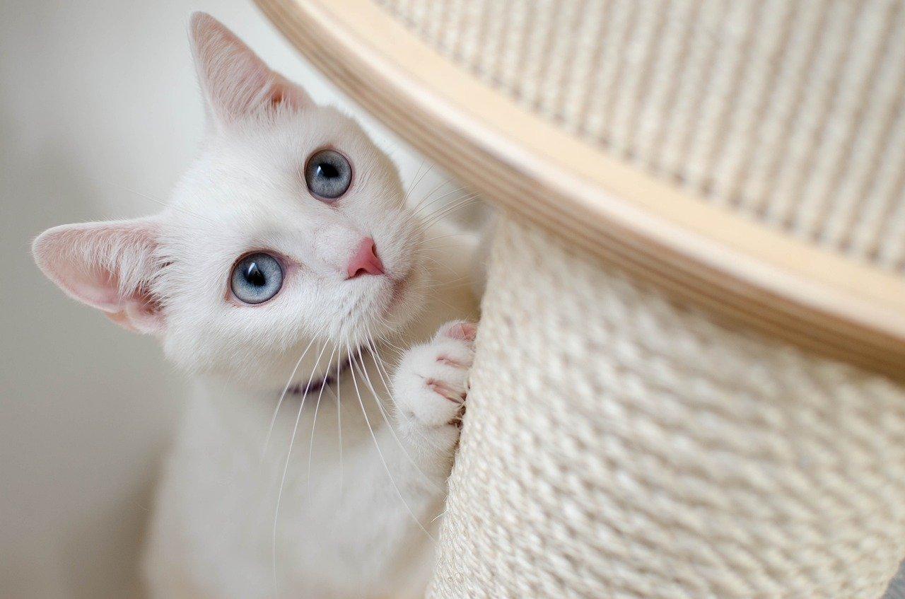 Внимание глазам, ушам и зубам кошки